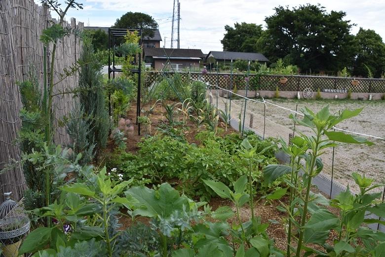 011 菜園