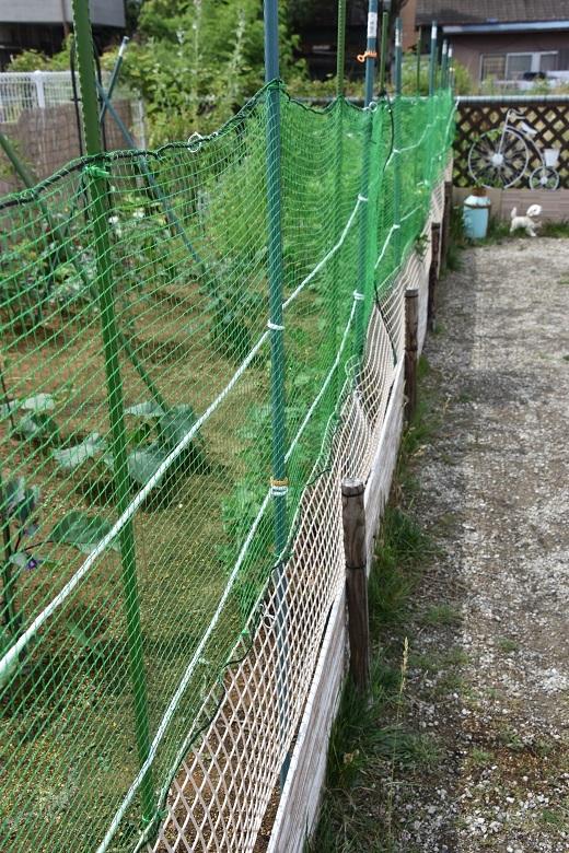 002 菜園