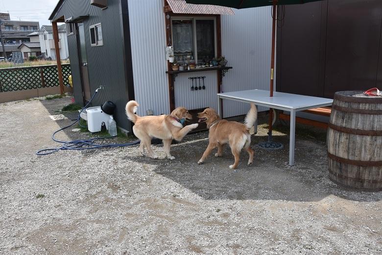 139 メロディ&リラちゃん