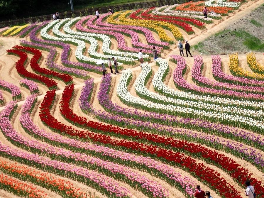 900花の世羅町P5070065