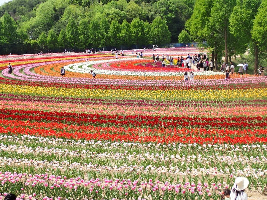 900花の世羅町P5070070