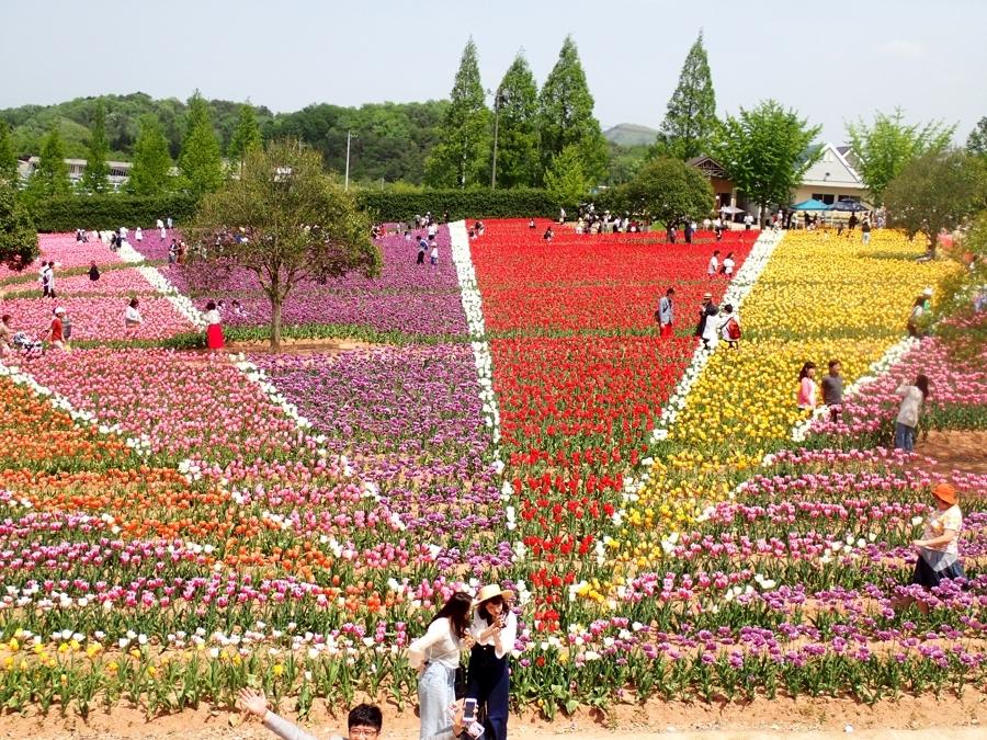 900花の世羅町P5070073