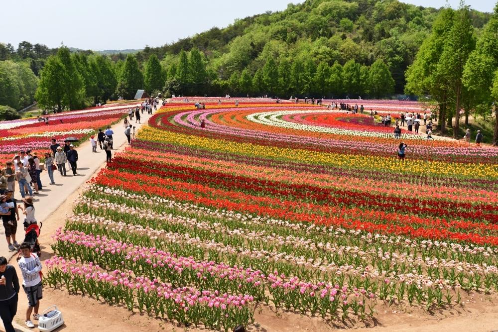 1000花の世羅町_8748