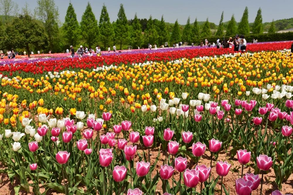 1000花の世羅町DSC_8711