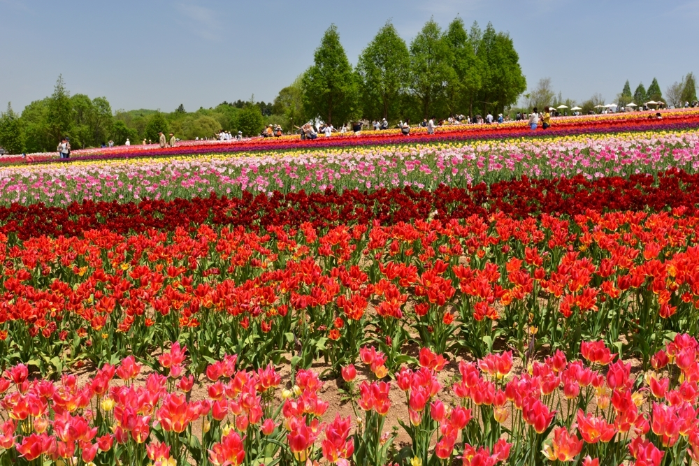 1000花の世羅町DSC_8728