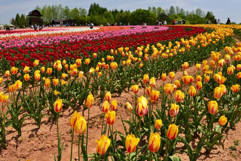 1000花の世羅町DSC_8737
