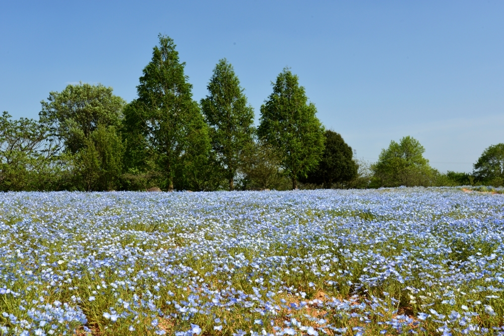 1000花の世羅町DSC_8805