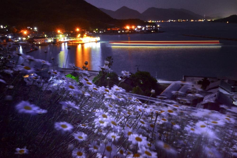 1000夜の除虫菊DSC_8843