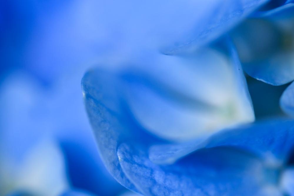 29626 ブログあじさいの花ー6-1