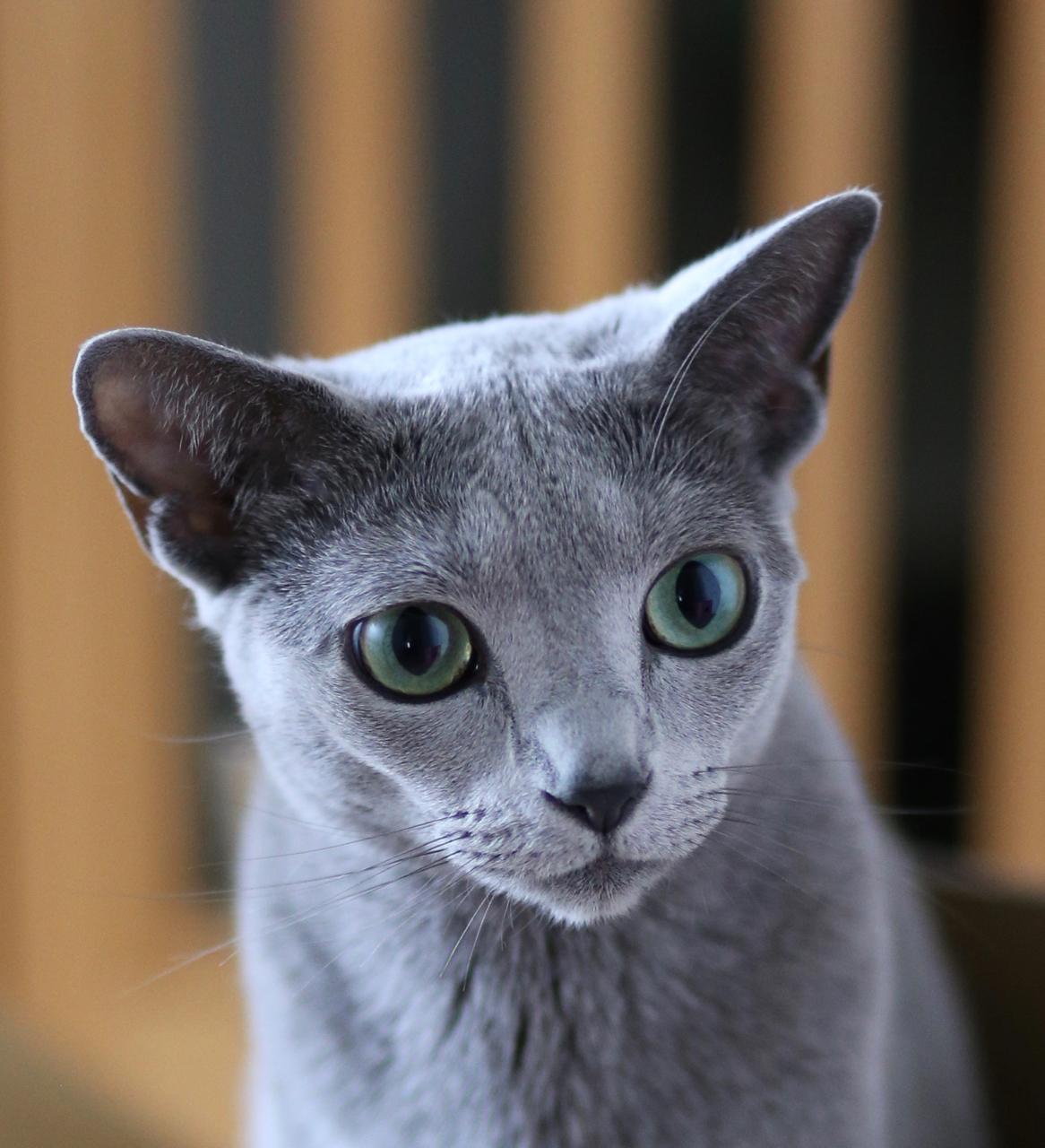エマ子猫みたい