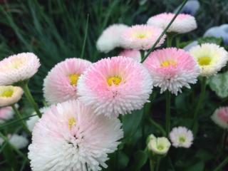 雨模様に似合う花