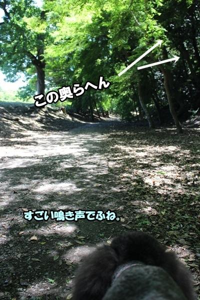 IMG_679920170604a.jpg
