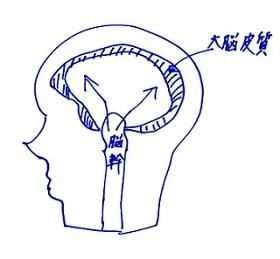脳幹からのてんかん0630
