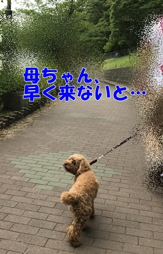 2017.6.19_1