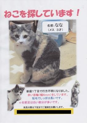 aoki_nana_maigo_0004.jpg