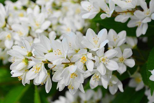 s-白い花②20170507