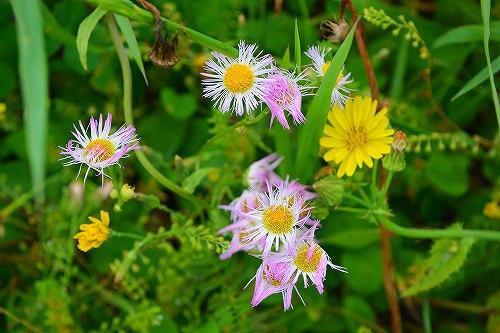 s-春の花々20170514