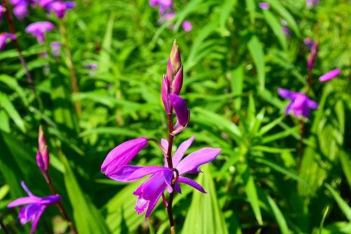 s-紫の花②20170521