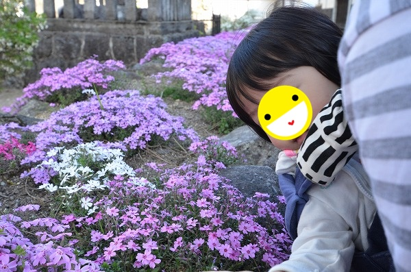 DSC_8639_20170504_4612.jpg
