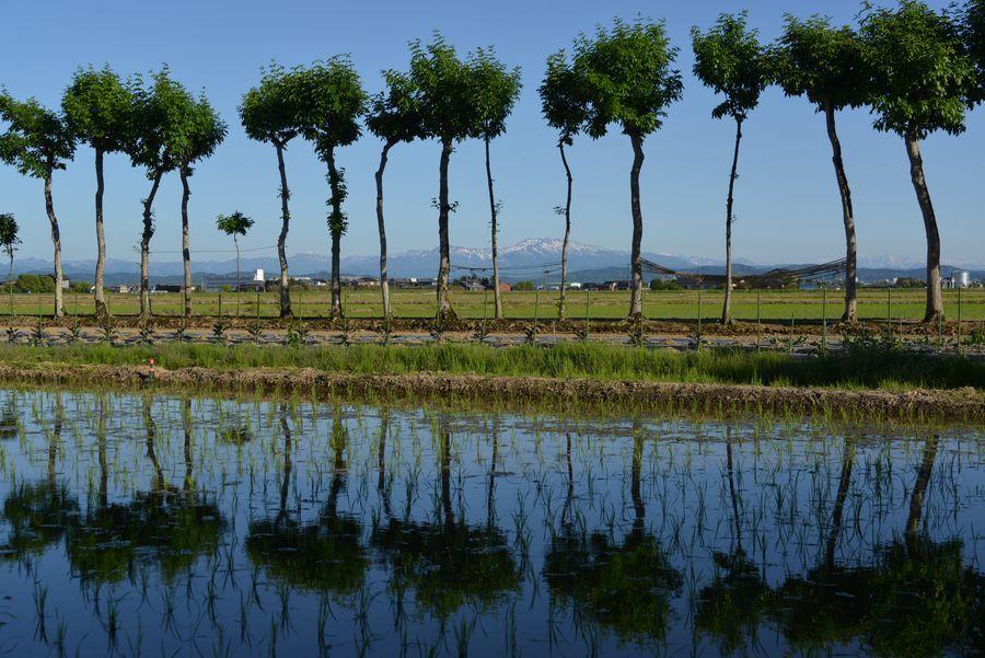 はざ木と水田-3