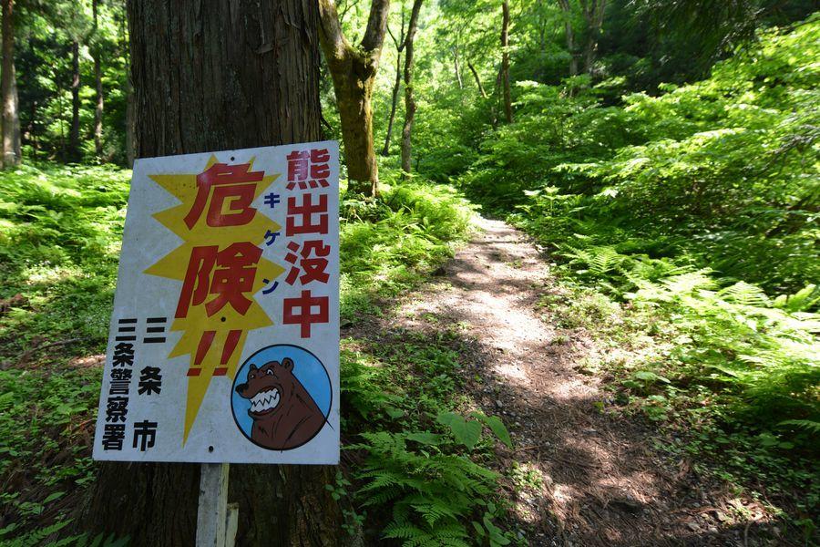 林の中-7