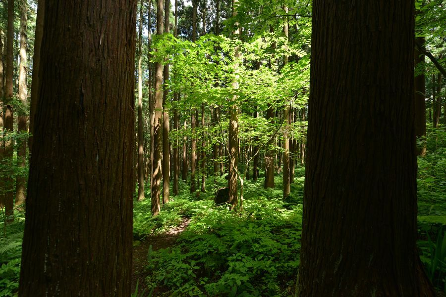 林の中-9