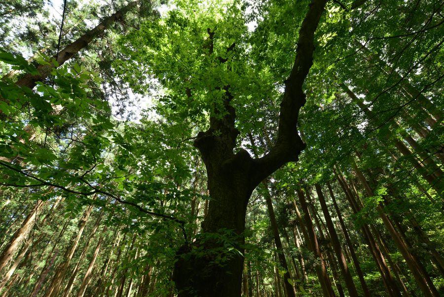 林の中-1