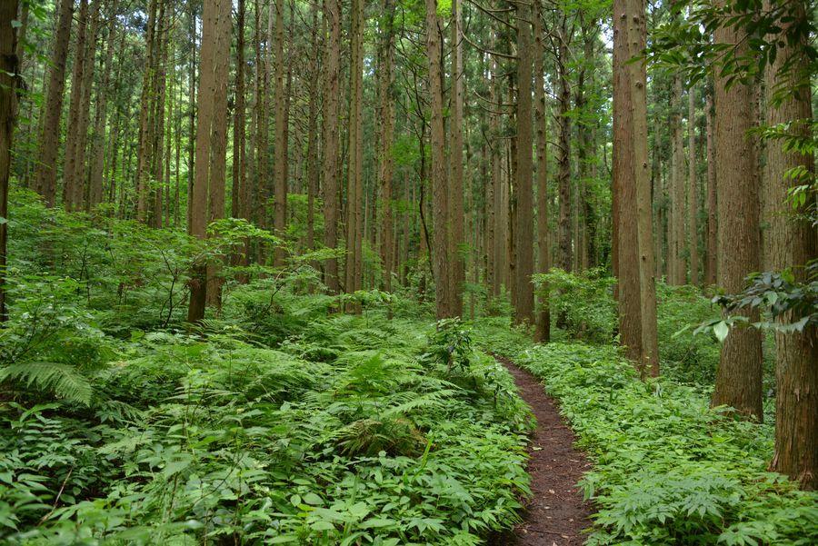 林の中-3