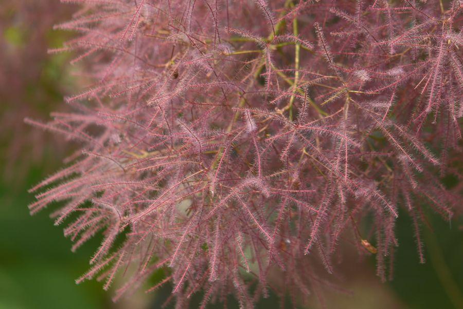 魚沼の里の花 アップ-5