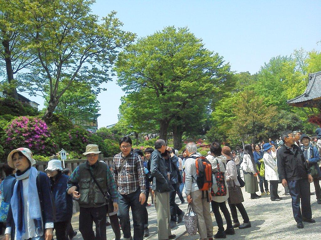 F1000274根津神社4月29日つつじ祭り