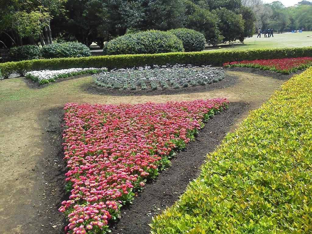 F1000252新宿御苑4月28日三角花壇デイジー