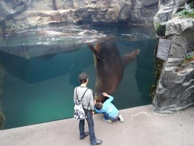 環境水族館・アクアマリンふくしまへ_2017.5月⑤
