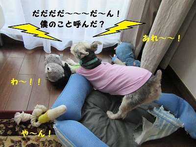 御前会議8