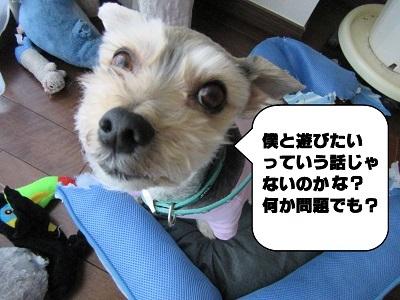 御前会議9