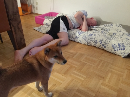 犬ベッドで寝るオランダ人2