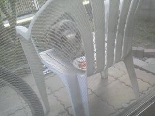 170224庭に野良猫