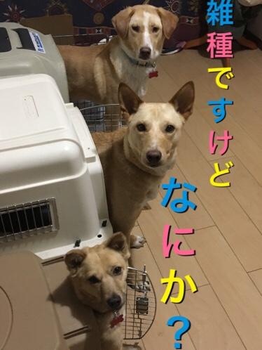 fc2blog_201706101313524ba.jpg