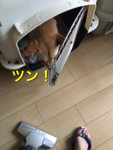 fc2blog_20170703112207ecb.jpg