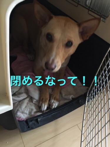 fc2blog_20170703112518486.jpg