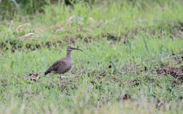 IMG_2530t (3)_1024