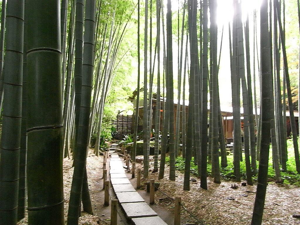 竹林と石庭_1