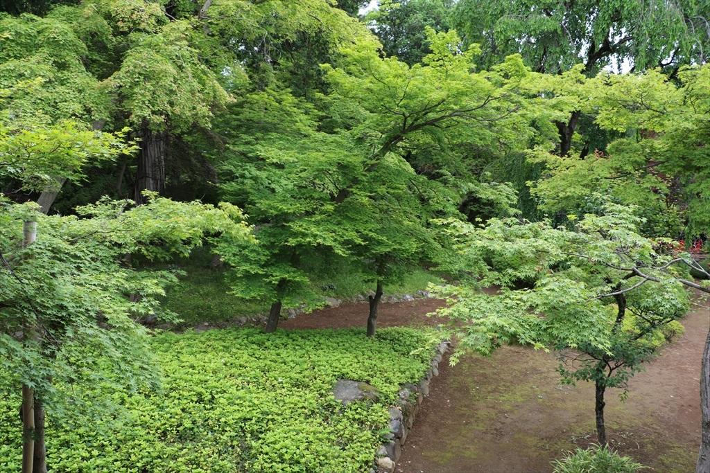 庭(その1)_6