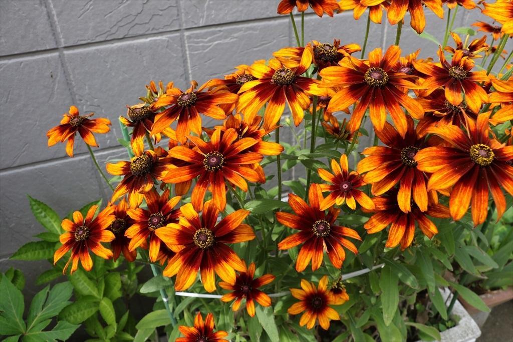 きれいなのは、街角の花さんばかりか_3
