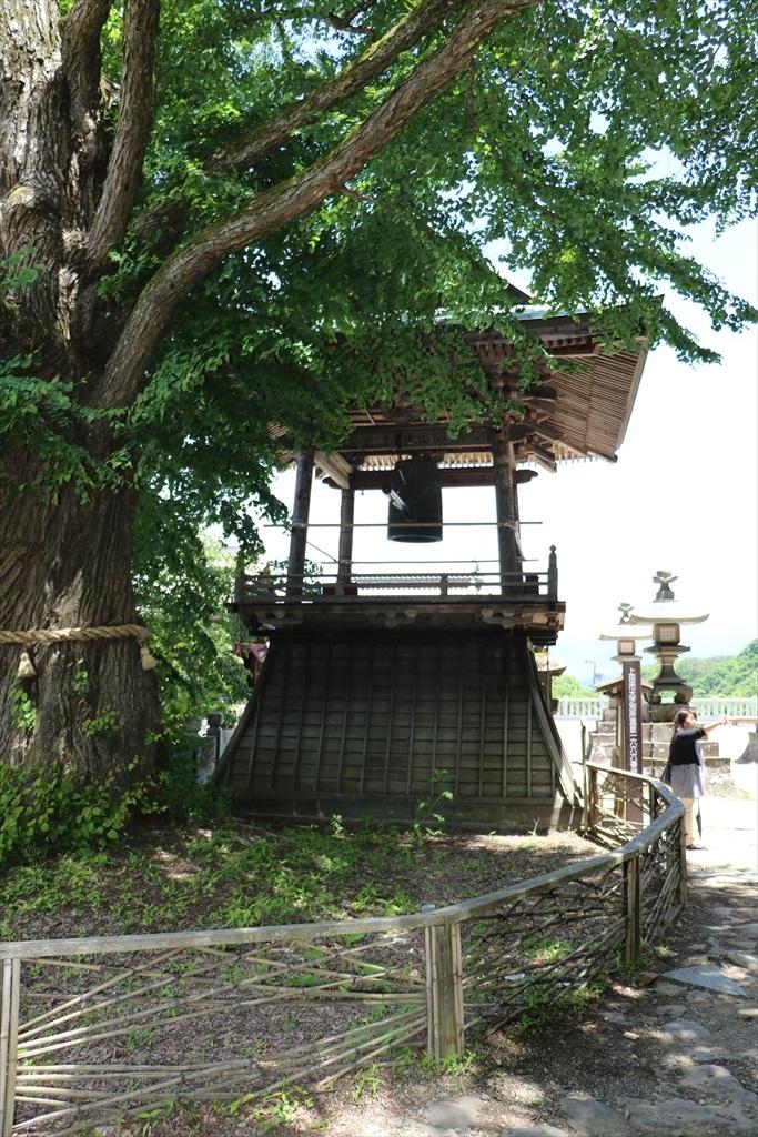 愛染カツラ(市指定文化財)_3