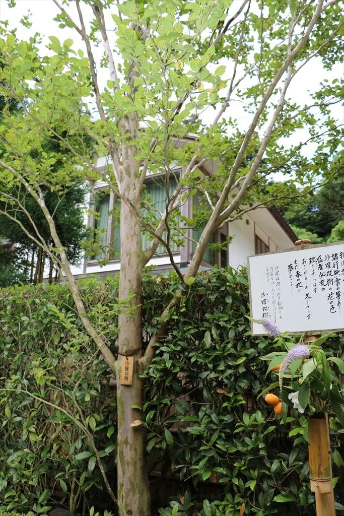 沙羅双樹の木_2