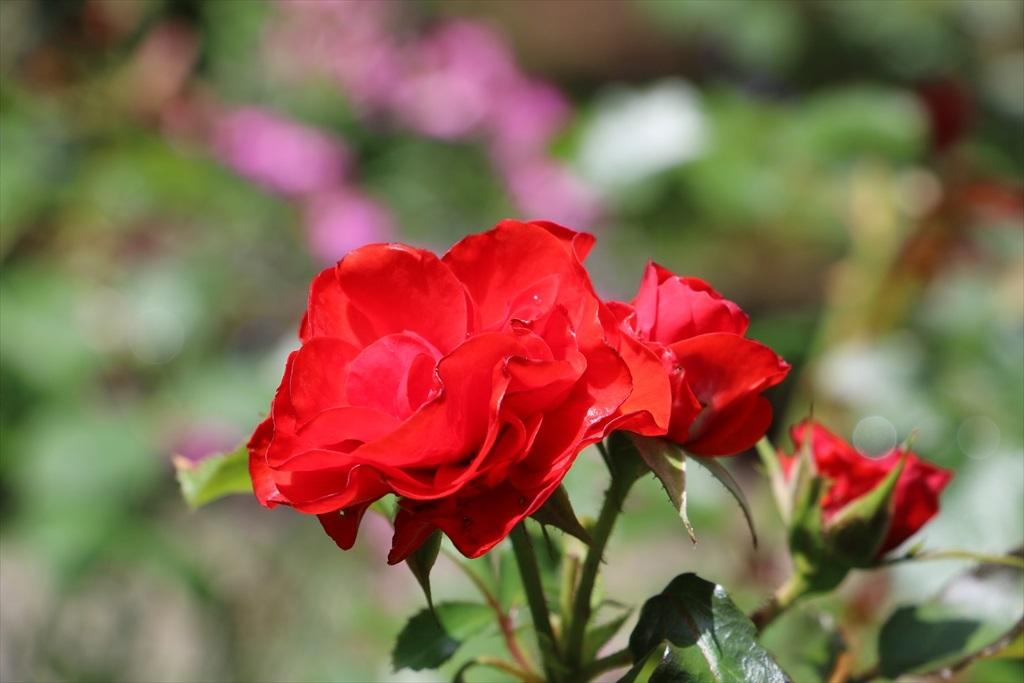 明月院に咲いていたその他の花_4