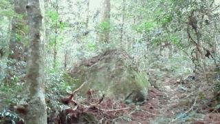大馬神社10