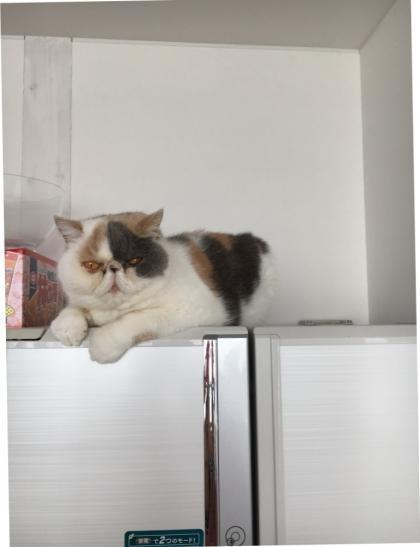 冷蔵庫の上から観察中