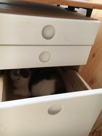 新たな隠れ家