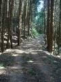 170429木の葉や枯れ枝の積もった木立の中を行く